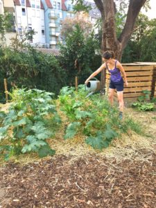 Les semis utilisés pour les plantations ont la plupart du temps été donnés par des adhérents à L'Arrosoir, ou par des voisins. (Photo EB - Les Défricheurs)