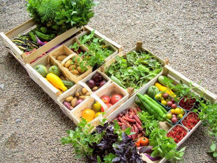 Panier de légumes - Le Carré du Ver Luisant